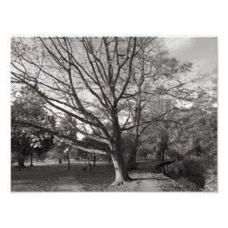 Paisaje del otoño, parque del Bute, Cardiff Cojinete