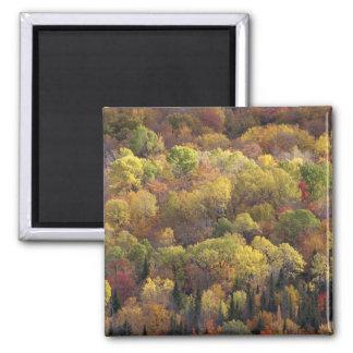 Paisaje del otoño, Vermont, los E.E.U.U. 2 Imán Cuadrado