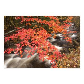 Paisaje del otoño Vermont los E E U U 4 Impresion Fotografica