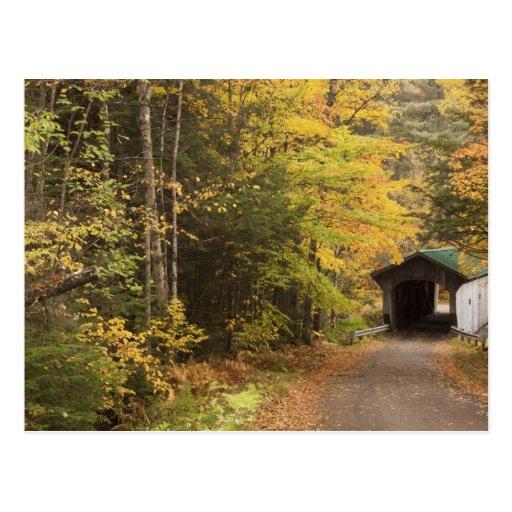 Paisaje del otoño, Vermont, los E.E.U.U. 4 Tarjeta Postal