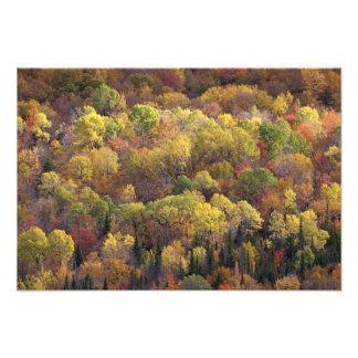 Paisaje del otoño, Vermont, los E.E.U.U. Impresion Fotografica