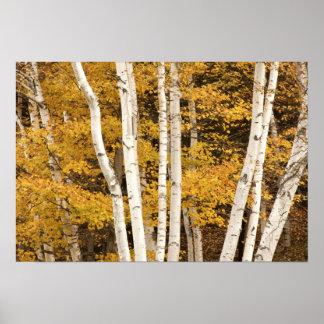 Paisaje del otoño, Vermont, los E.E.U.U. Póster