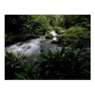 Paisaje el Amazonas del río de la corriente de la Tarjeta Postal