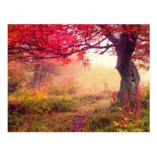 Paisaje majestuoso con los árboles del otoño en postal