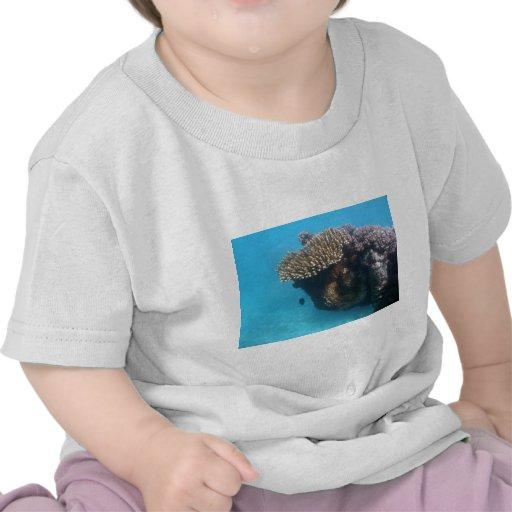 Paisaje marino coralino camiseta