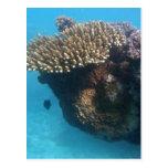 Paisaje marino coralino tarjeta postal