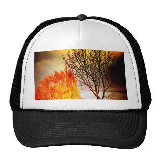 paisaje moderno de las ramas de árbol de la puesta gorras