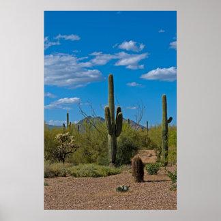 Paisaje natural 3994 del cactus impresiones