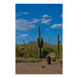 Paisaje natural 3994 del cactus póster