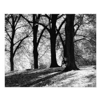 Paisaje negro y blanco en Central Park Arte Con Fotos