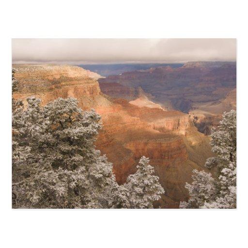 Paisaje nevoso escénico del invierno a lo largo de postales