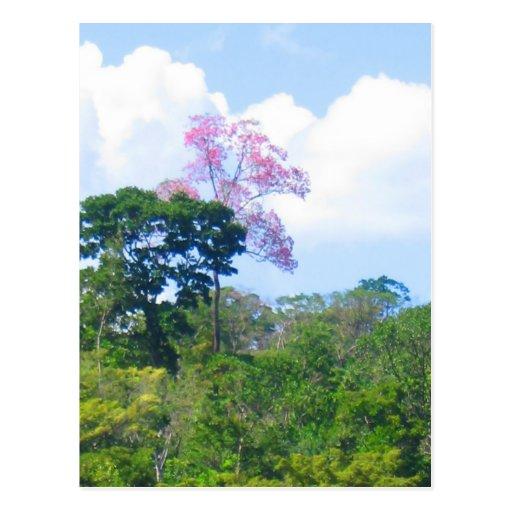 Paisaje rosado de la selva de Venezuela del árbol Tarjeta Postal