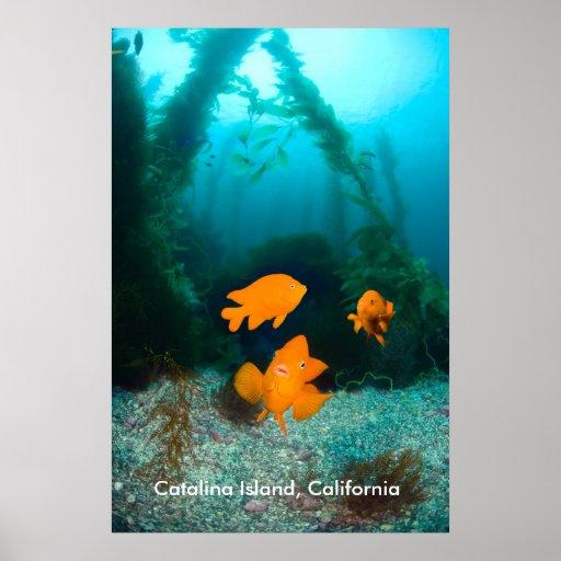 Paisaje subacuático posters