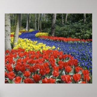 Países Bajos, Holanda, Lisse, jardines de Keukenho Póster