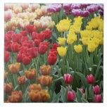 Países Bajos, jardines de Keukenhoff, tulipanes Teja