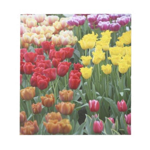 Países Bajos, jardines de Keukenhoff, tulipanes Bloc De Notas