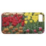 Países Bajos, jardines de Keukenhoff, tulipanes iPhone 5 Case-Mate Carcasa