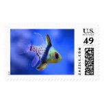 Pajama Cardinalfish Postage Stamp
