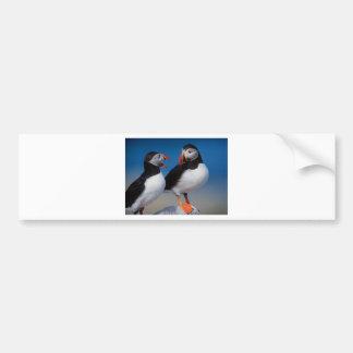 pájaro a los pares de frailecillos pegatina para auto