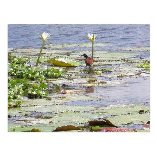 Pájaro acuático postales
