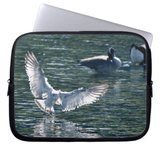 Pájaro-amantes de agua dulce blancos de la gaviota fundas ordendadores