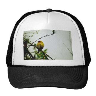 Pájaro amarillo a solas en rama gorra