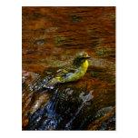Pájaro amarillo amarillo que se baña postal