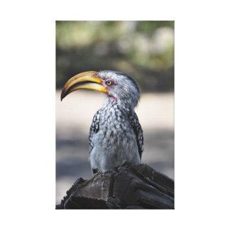 Pájaro Amarillo-cargado en cuenta meridional hermo Lona Estirada Galerias