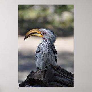 Pájaro Amarillo-cargado en cuenta meridional hermo Impresiones
