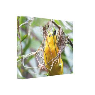 Pájaro amarillo impresion de lienzo