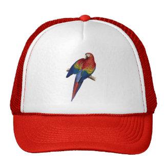 Pájaro amarillo rojo del verde azul del loro del M Gorras De Camionero