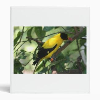 Pájaro amarillo y negro brillante en árbol