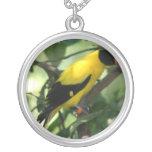 Pájaro amarillo y negro brillante en árbol colgante