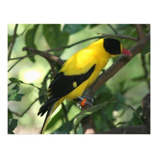 Pájaro amarillo y negro brillante en árbol flyer personalizado