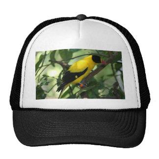 Pájaro amarillo y negro brillante en árbol gorro