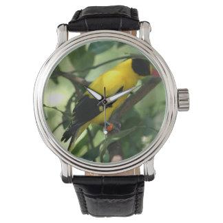 Pájaro amarillo y negro brillante en árbol reloj