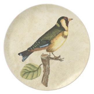 Pájaro amarillo y verde encaramado en una pequeña plato de comida