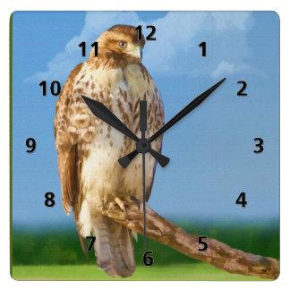 pájaro Áspero-legged del halcón Reloj Cuadrado