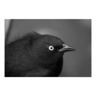 Pájaro asustadizo de Hitchcock Póster