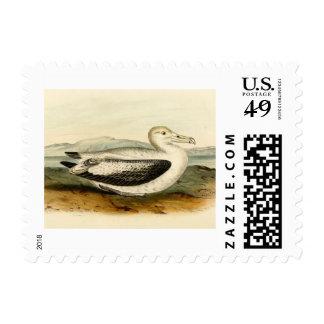 Pájaro atado cortocircuito del albatros del estampilla