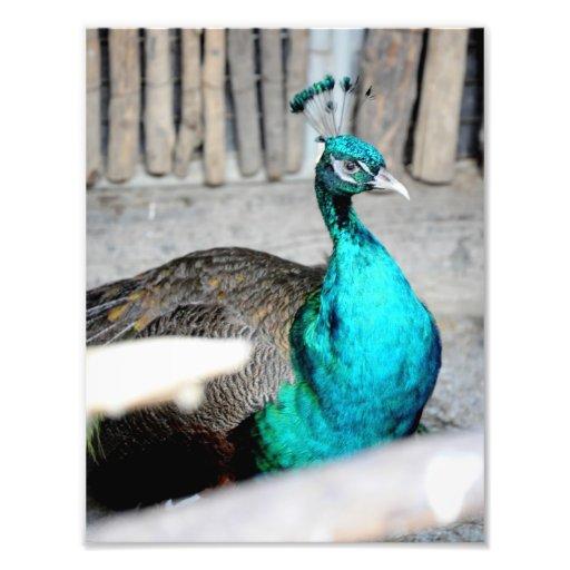 Pájaro azul arte con fotos