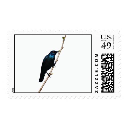 Pájaro azul brillante de Starling de la felicidad Estampillas