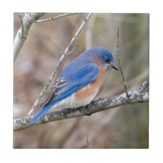 Pájaro azul del Bluebird en árbol Azulejo Cuadrado Pequeño