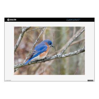 Pájaro azul del Bluebird en árbol Calcomanía Para 38,1cm Portátil
