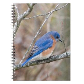 Pájaro azul del Bluebird en árbol Libretas Espirales