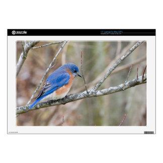 Pájaro azul del Bluebird en árbol Portátil Calcomanías