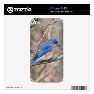 Pájaro azul del Bluebird en árbol Skins Para iPhone 4