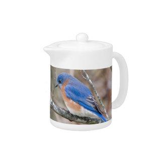 Pájaro azul del Bluebird en árbol