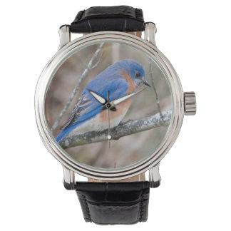 Pájaro azul del Bluebird en el reloj de la rama