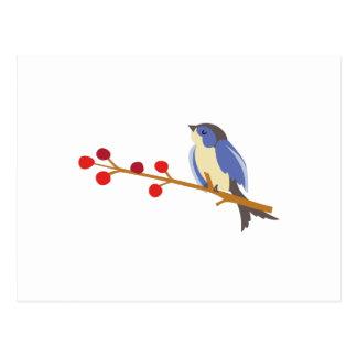 Pájaro azul del invierno en rama tarjeta postal